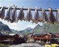 Reiseführer Informationen über die Lofoten und tolle Hütten für Angler und Ferienhaus Angebote für Familien von Ferienhaus-Norwegen.de